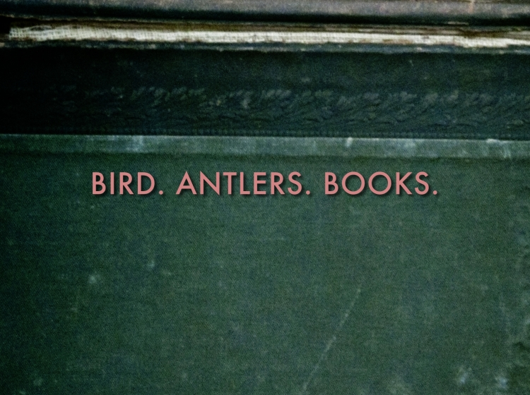 birdantlersbooks