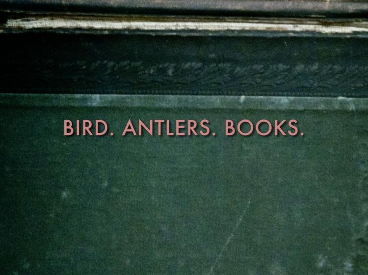 birdantlersbooks